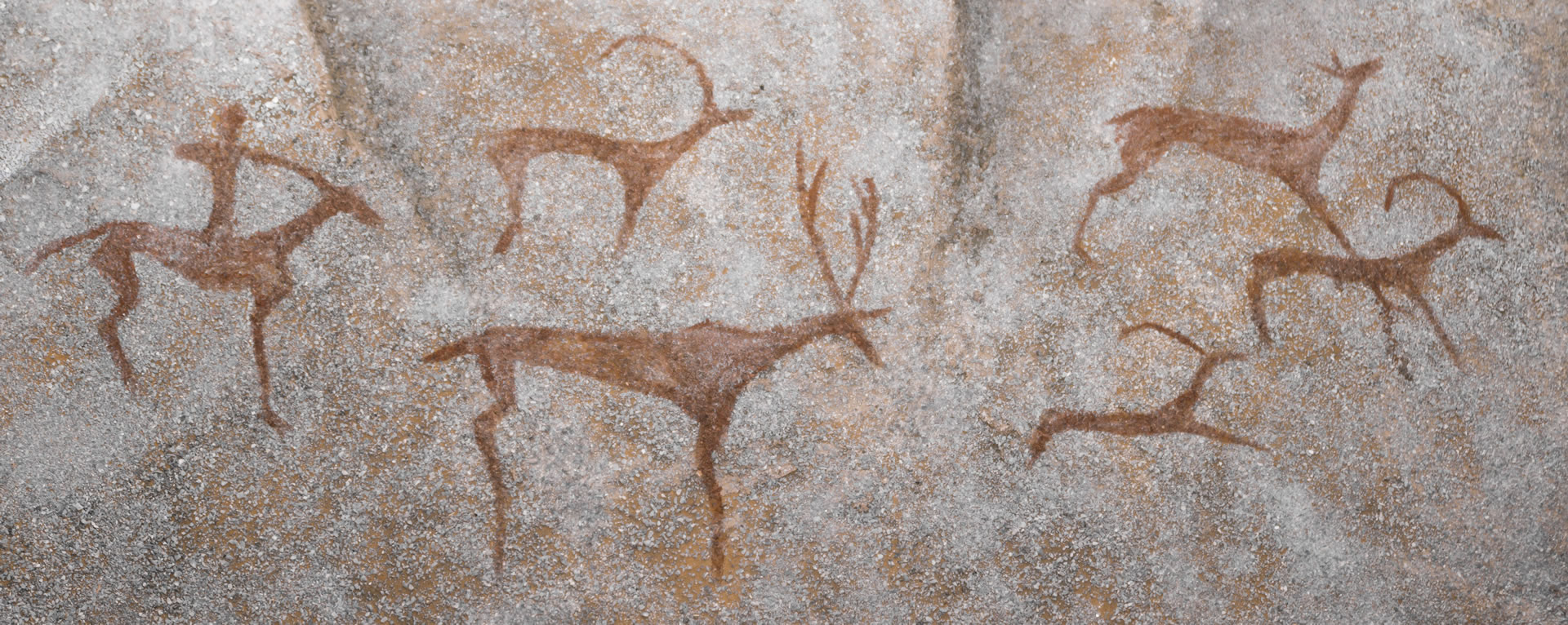 Cave drawings of deer