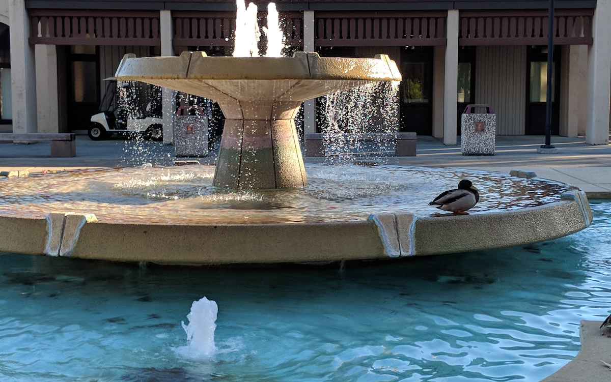 fountain duck
