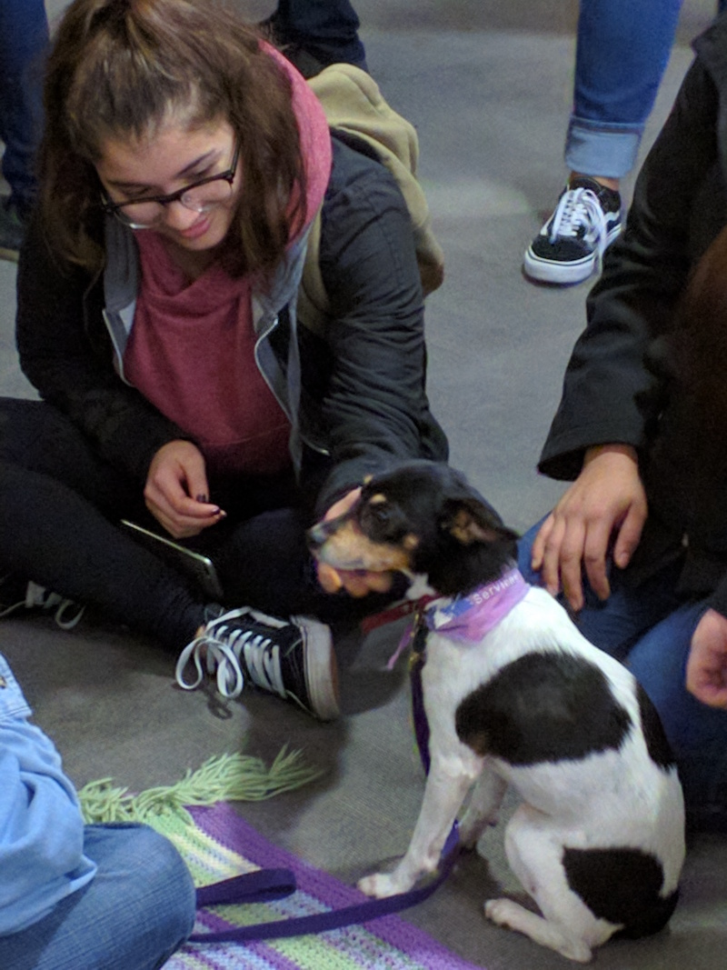 student petting small dog