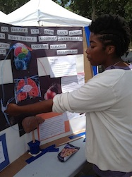 Female student explaining respiratory system, liver and metabolism at fair.